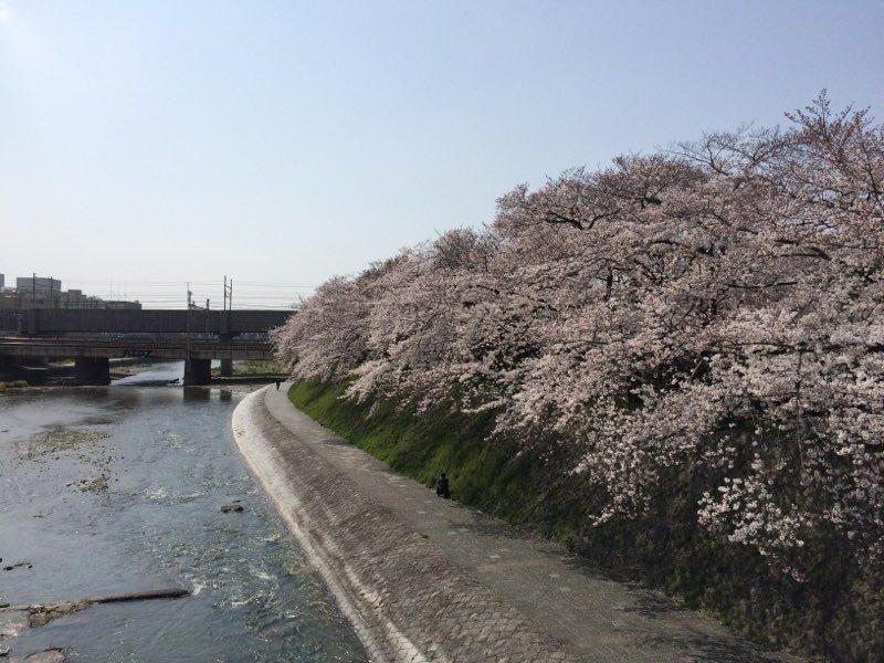 京都鴨川ランニング